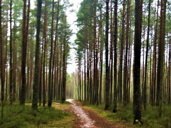 Прогулка по парку Кемери в Юрмале