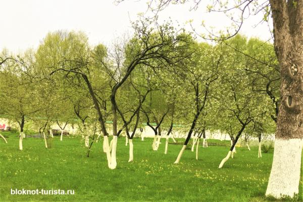 яблонево-грушевый сад Мирожского монастыря в Пскове