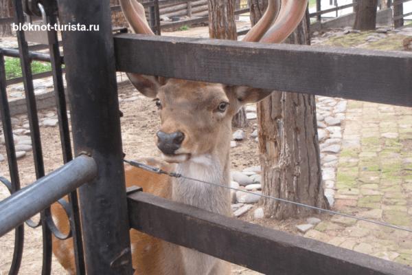 Еще один обитатель зоопарка в Тбилиси