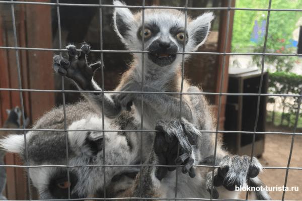 Милые лемуры в зоопарке Тбилиси (едем с детьми)