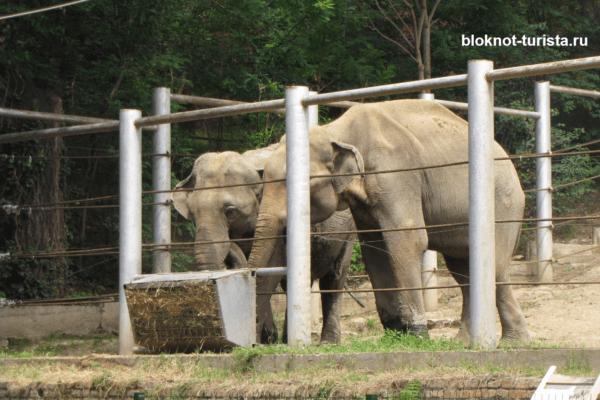 Слоны в зоопарке Тбилиси