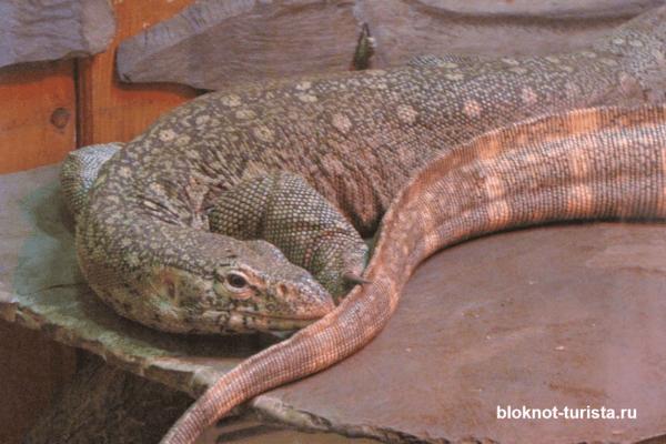 Обитатели террариума в зоопарке Тбилиси