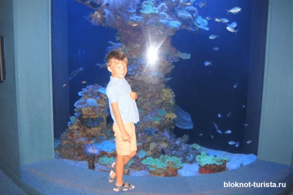Аквариум Пальма на острове Майорка