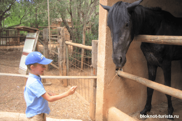 Кормим лошадь в Натура Парке (Майорка)