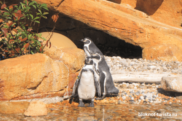 Мини-пингвины в дельфинарии Маринленд (Майорка)