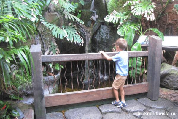 Тропическая зона в аквариуме Пальмы