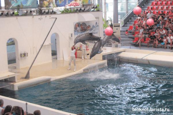 Представление в дельфинарии Варны