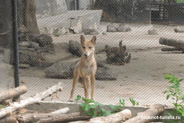 Смешные волчата в зоопарке Варны