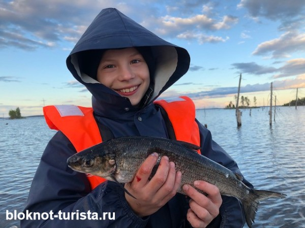 Рыбалка на  сига на Пяозере в Карелии в